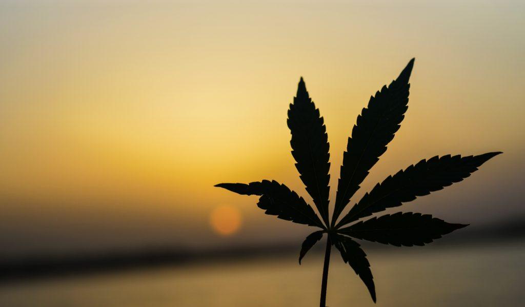 como invertir en marihuana desde España